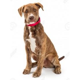 Collar Rojo LaikaPet Small